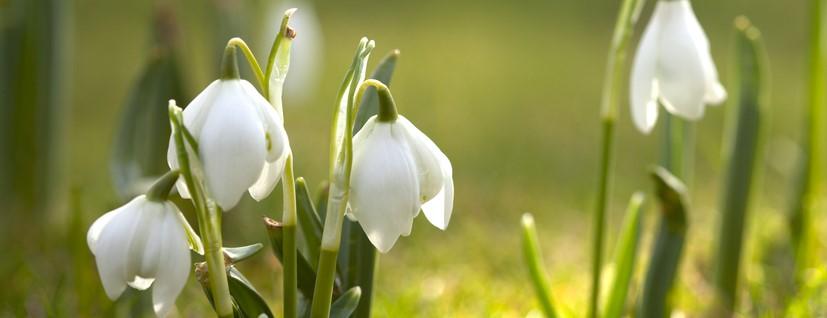 Mimo wszystko - wiosna :)